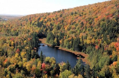forêt Québec.jpg