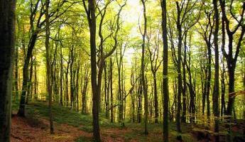 forêt meuse.jpg