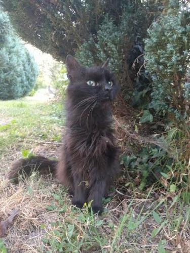 poe,chat noir,folie,baudelaire,nouvelle,fantastique,nouvelles histoires extraordinaires